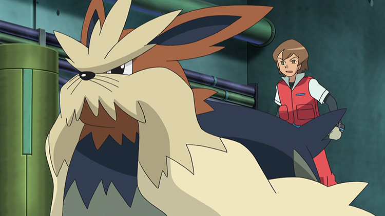 Stoutland in Pokémon anime