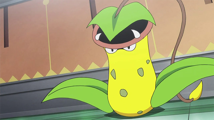 Victreebel in the anime