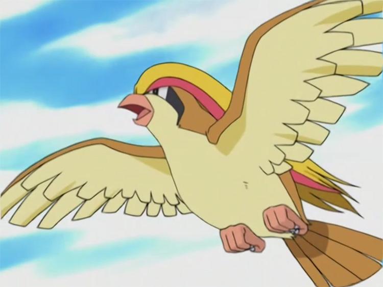 Pidgeot Pokemon in the anime