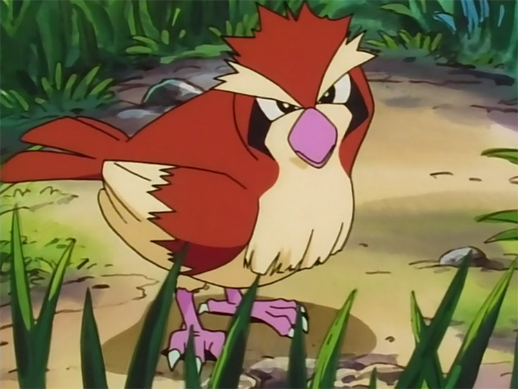 Pidgey in the anime