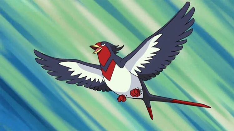 Swellow in the anime