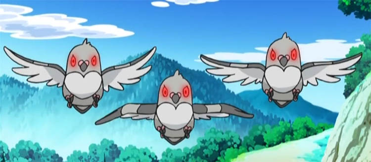 Pidove in the anime