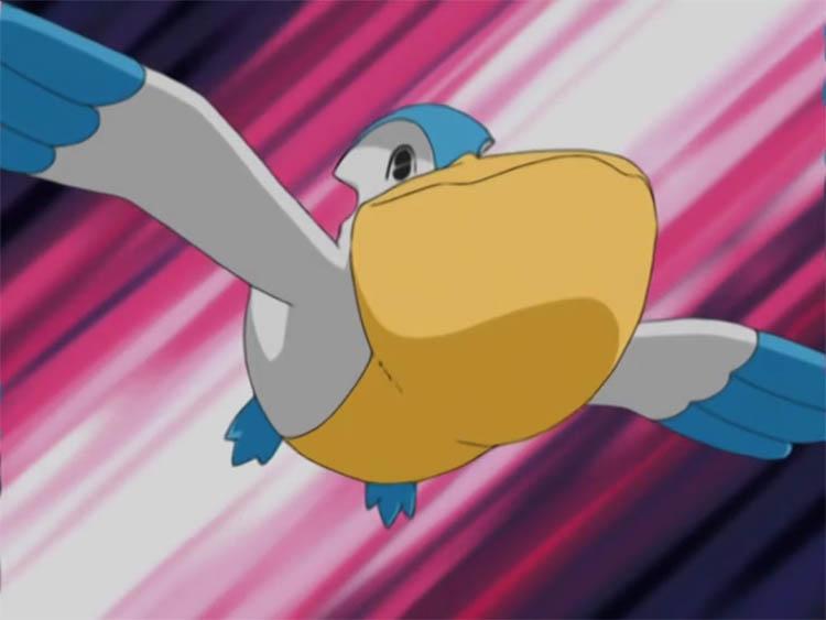 Pelipper in the anime
