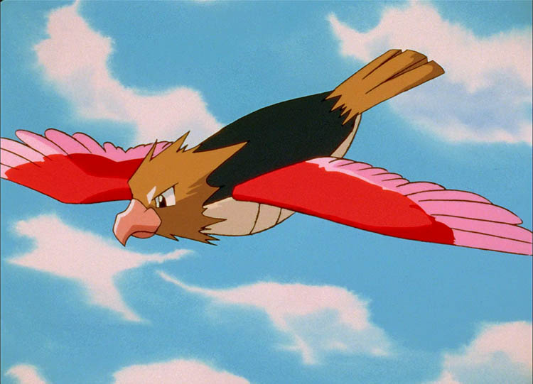 Spearow in the anime