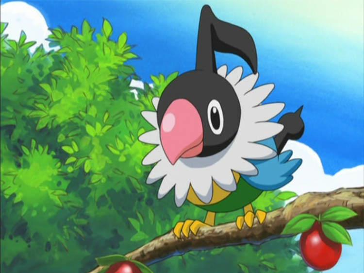 Chatot in the anime