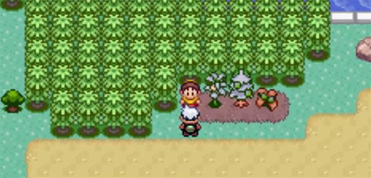 TM19 Route 123 Location in Pokemon Emerald