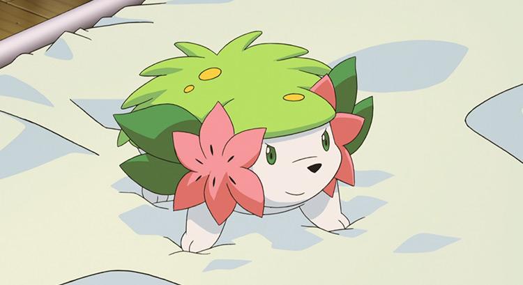 Shaymin in Pokemon anime