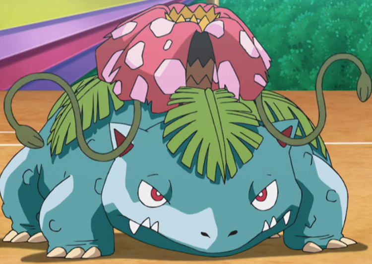 Venusaur Pokemon anime screenshot