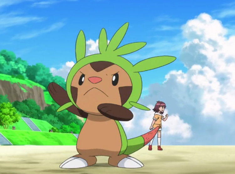 Chespin Pokemon in the anime
