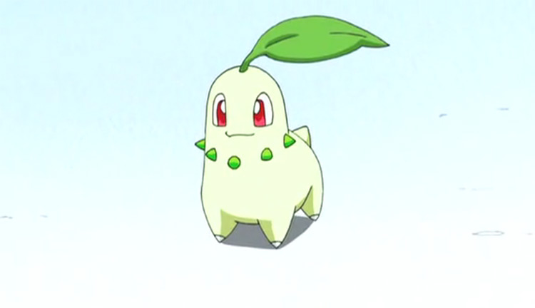 Chikorita from the Pokemon anime