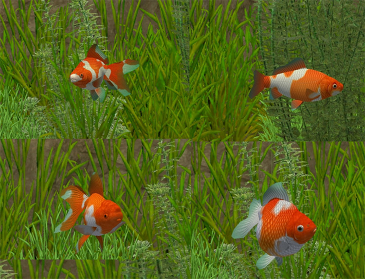 Fish Import Packs for Zoo Tycoon