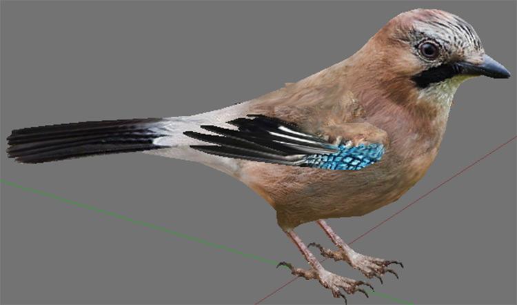 Eurasian Jay mod