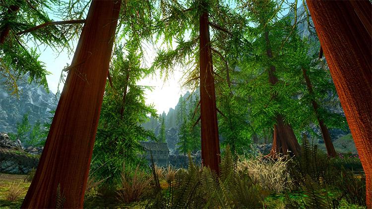 Skyrim graphics & aesthetics mod preview