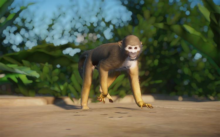 Ecuadorian Squirrel Monkey Planet Zoo Mod