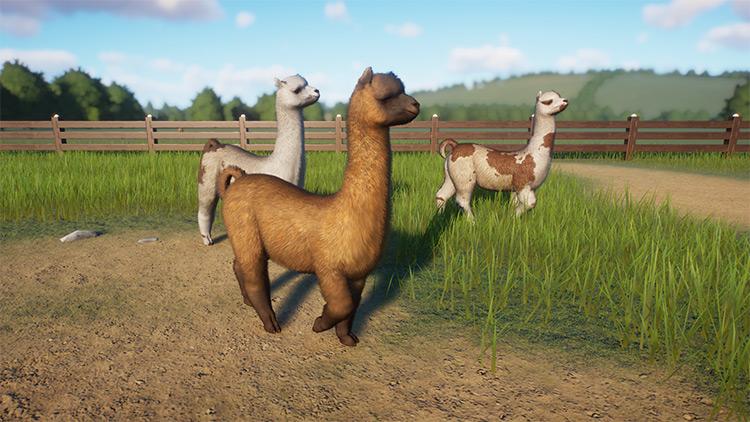 Alpaca Planet Zoo Mod screenshot
