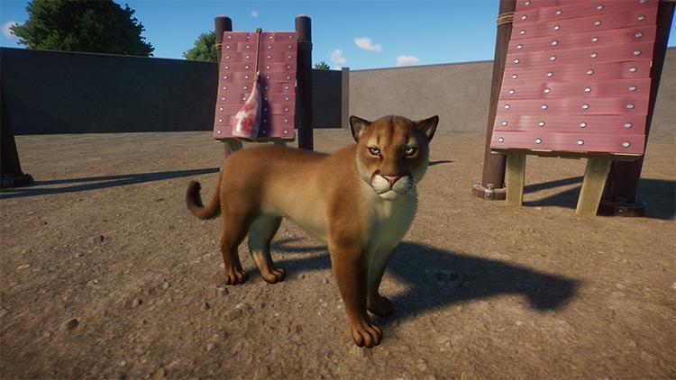 Cougar Planet Zoo Mod screenshot