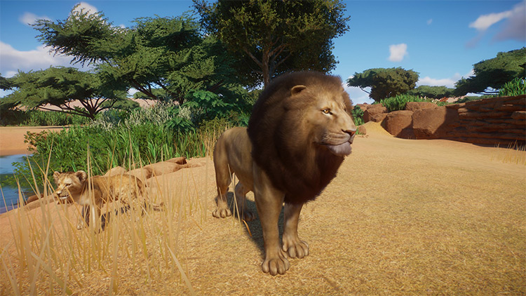 Lion Remaster Planet Zoo Mod