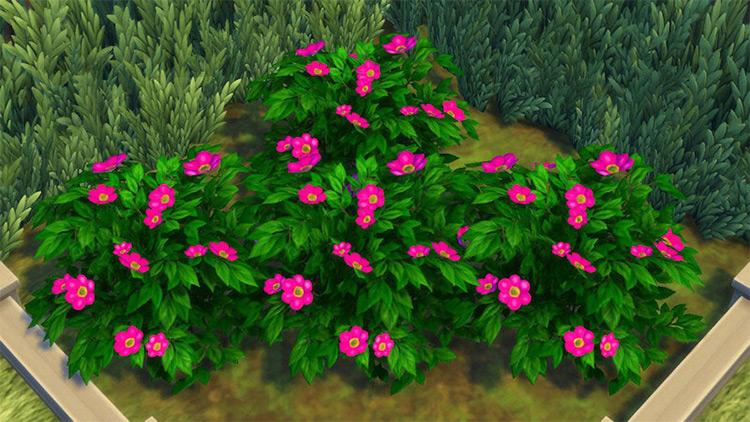 Dull Daisies Sims 4 CC