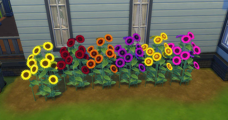 Sunflowery Shrubbery Sims 4 CC