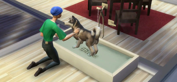 Dog Bath CC preview from The Sims 4