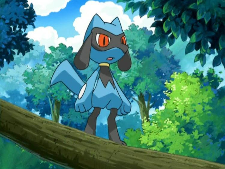 Riolu from pokemon anime