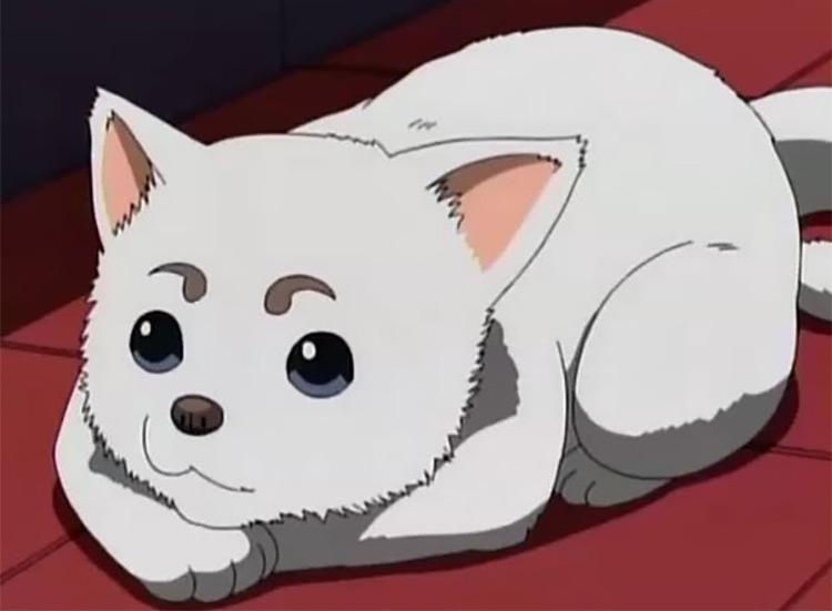 Sadaharu in Gintama Anime