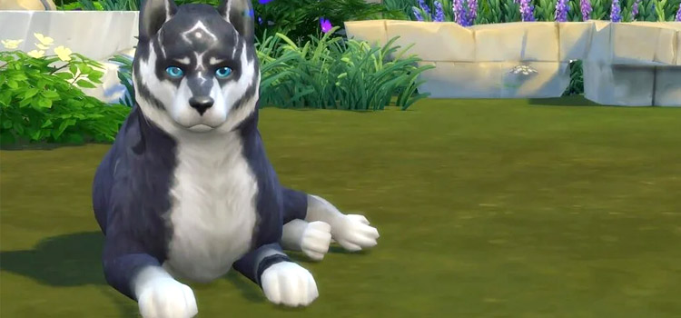 Wolf Link recreated in The Sims 4