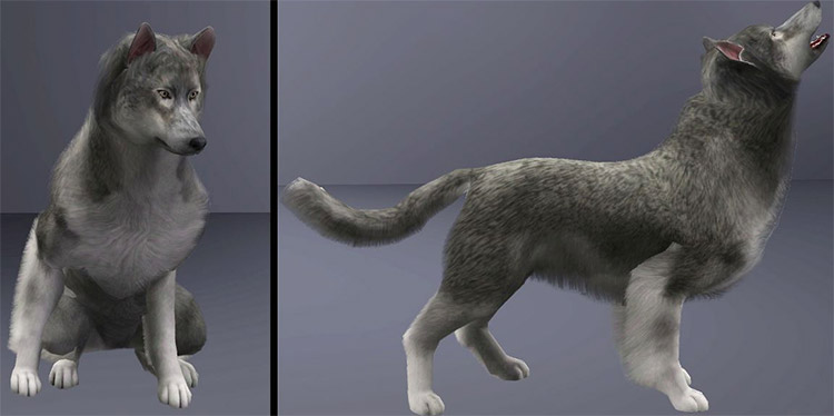 Sims 4 Mod - Grey Wolf as a Pet Preview