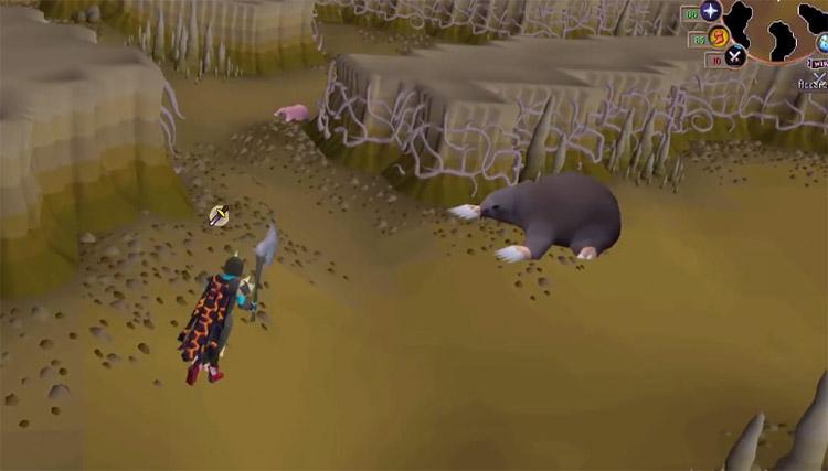 Giant Mole Boss Battle in OSRS