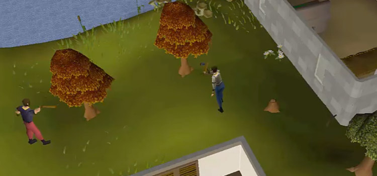 Cutting maple trees in Seers' Village in OSRS