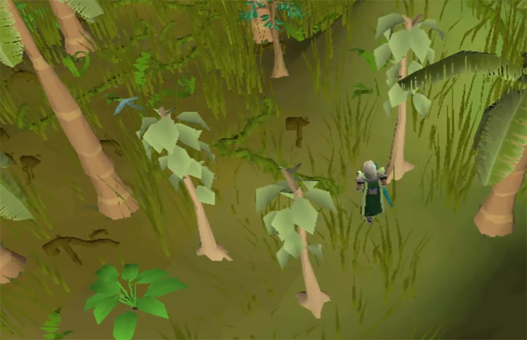 Teak trees in Old School RuneScape