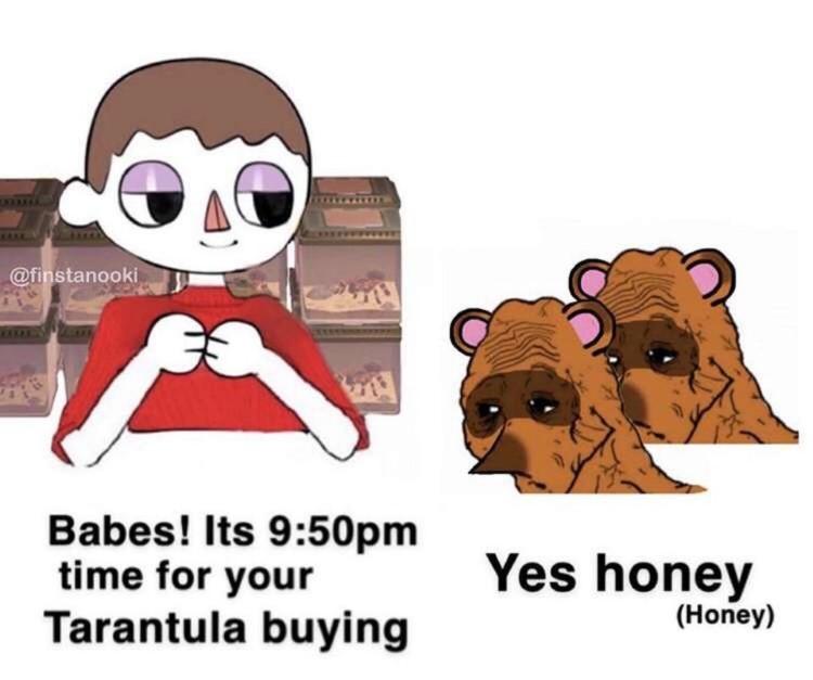 Time to buy tarantulas Nook meme