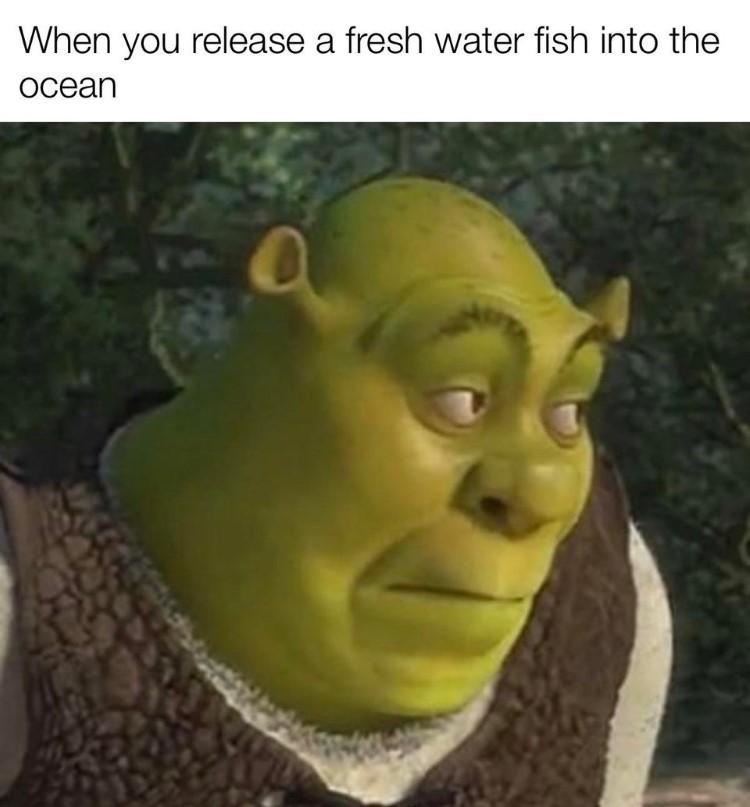 Shrek Animal Crossing meme crossover