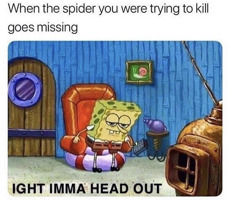 Spider is missing in the house? iight imma head out