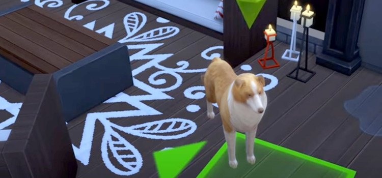 Lassy dog styled in Sims4 mod screenshot