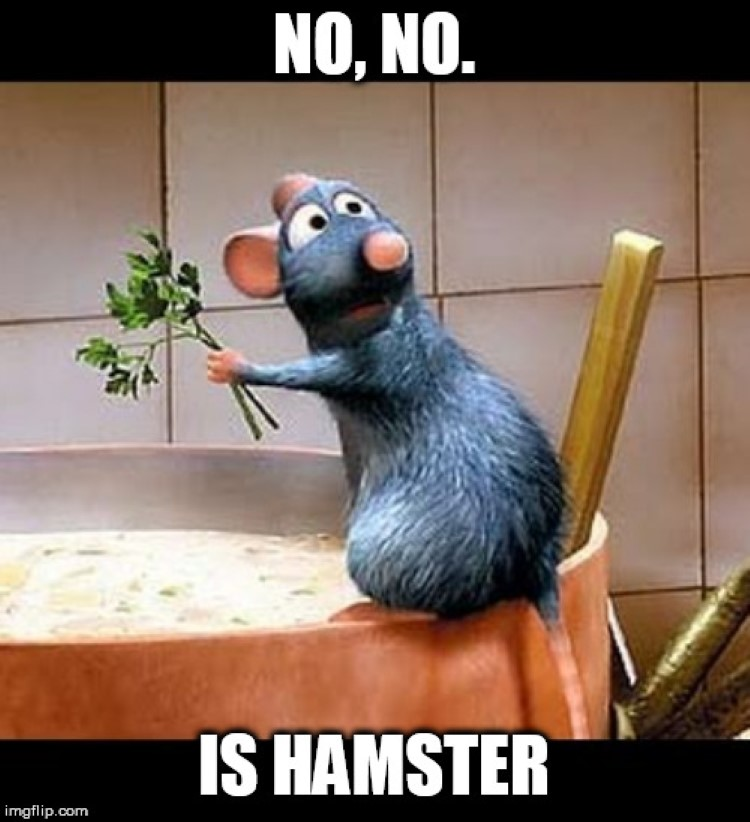 No, no, is hamster meme