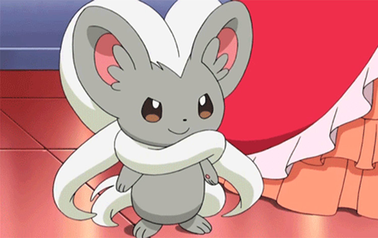 Cinccino from Pokémon anime