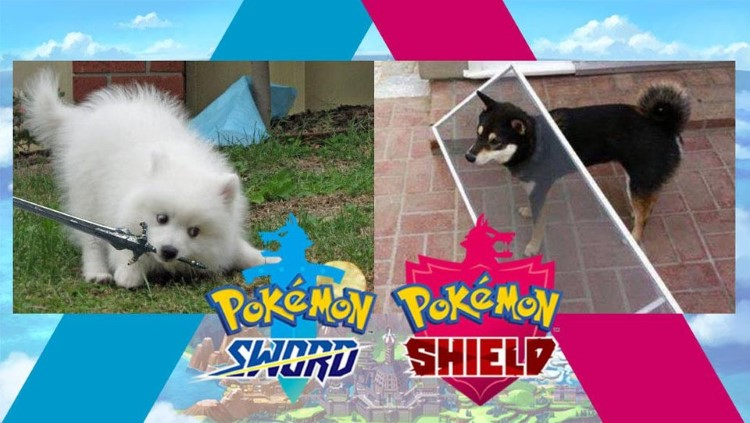 Pokemon Sword and Shield, real life dogs