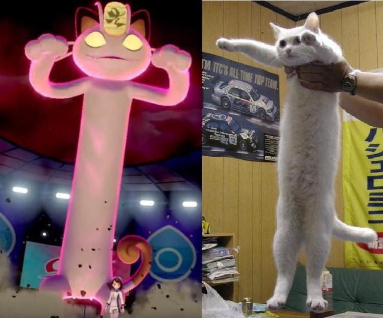 Long cat Meowth meme