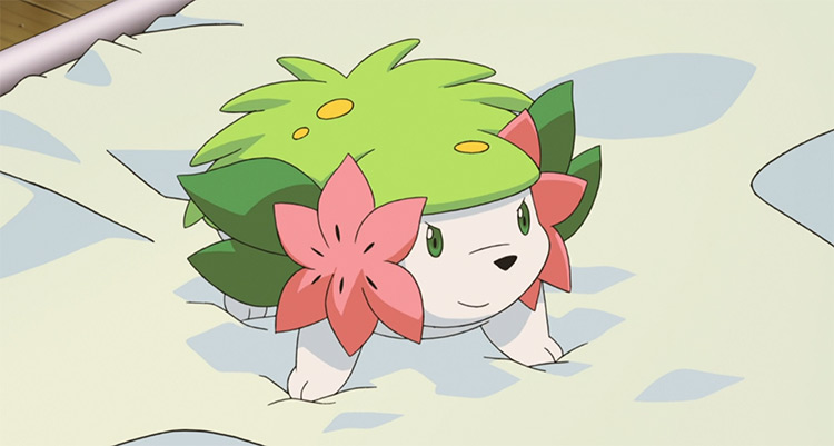 Shaymin grass pet rock Pokemon
