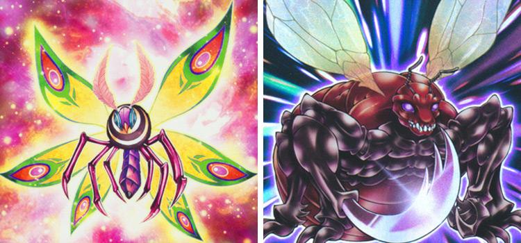 Primitive Butterfly & Greatfly YGO