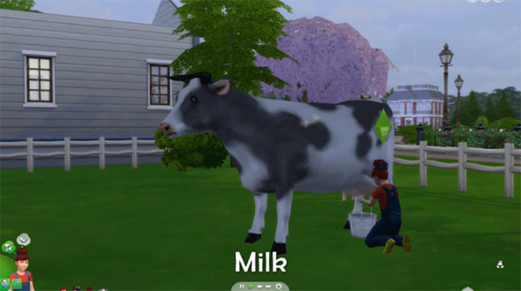 Dairy Cow Mod for The Sims 4