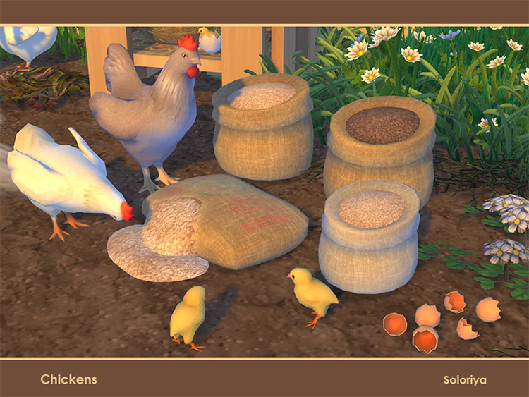 Chickens Set Part 1 for The Sims 4