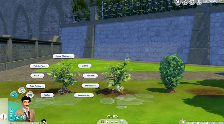 Custom Garlic, Parsnip & Cucumber Plants for The Sims 4