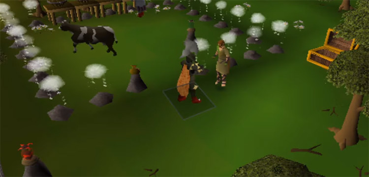 Cow area battle close-up in OSRS