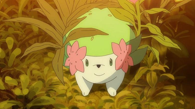 Shaymin from Pokemon anime