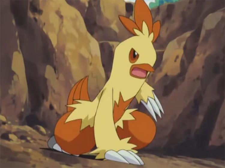 Combusken Pokemon anime screenshot