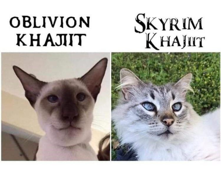Skyrim Khajiit meme