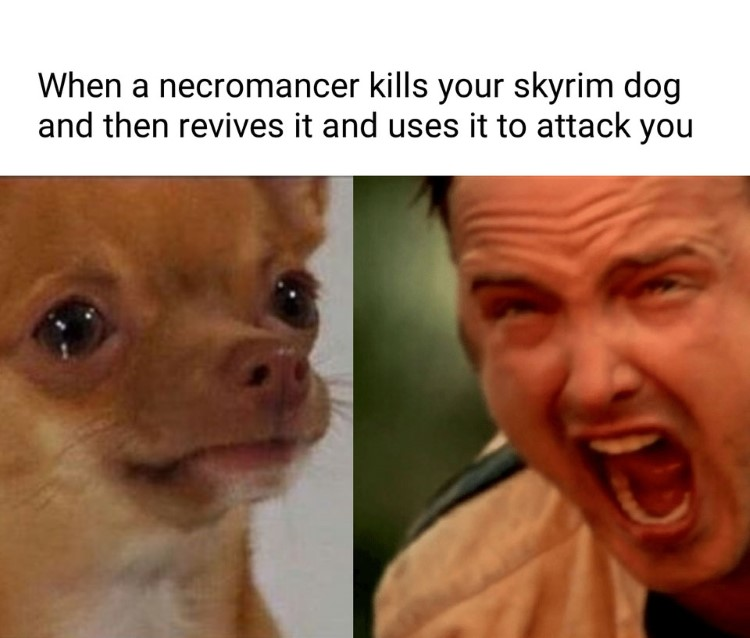 When a necromancer kills your Skyrim dog and revives it meme