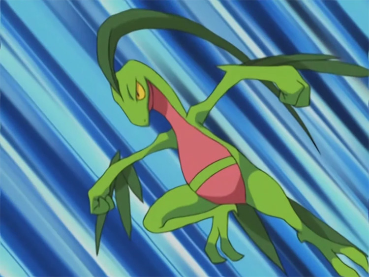 Grovyle from Pokemon anime